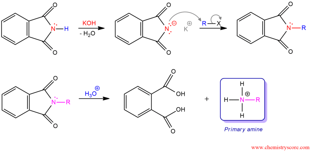 Gabriel Synthesis of amines - ChemistryScore