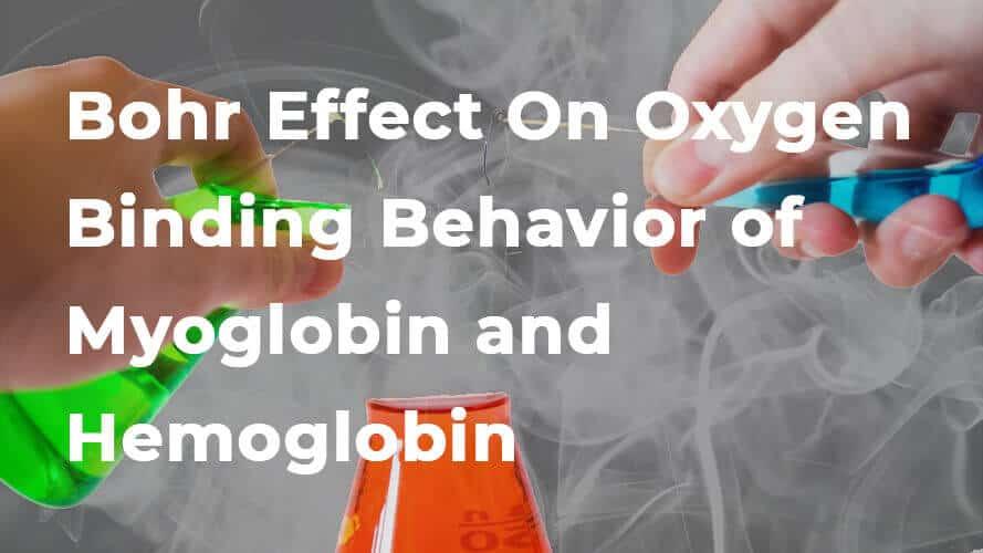 Bohr Effect On Oxygen Binding Behavior of Myoglobin and Hemoglobin