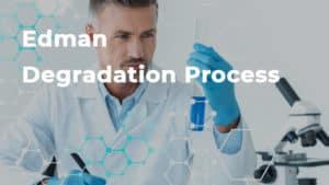 Edman Degradation Process