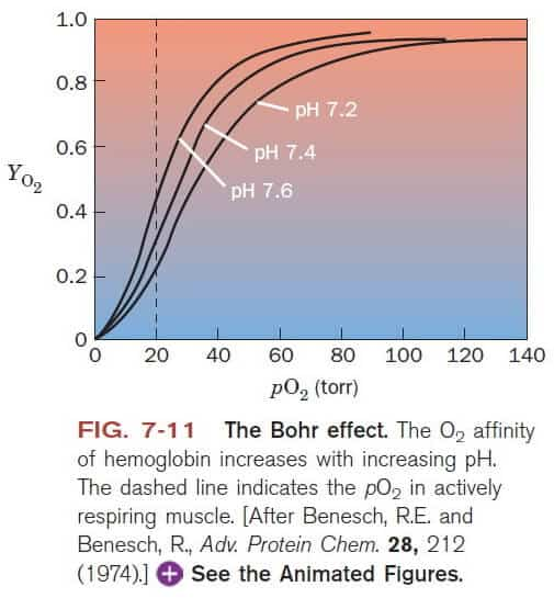 The-Bohr-Effect-Comes